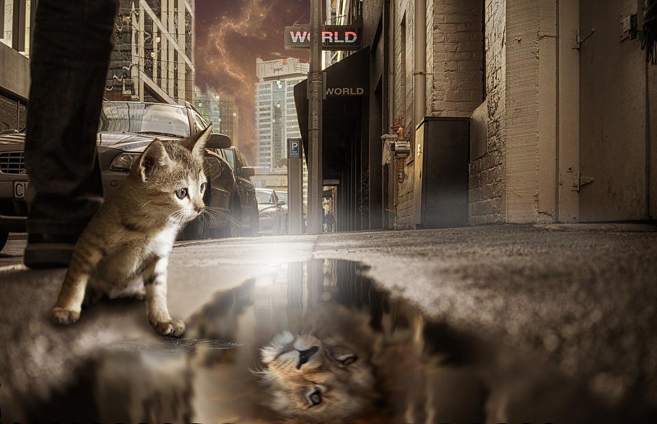 Katze-Löwe-Spiegel